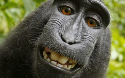 Why is this monkey smiling… and how can the answer help you in business?