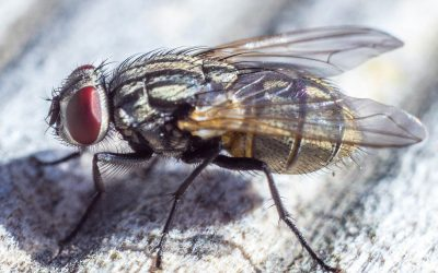 What a Fly Can Teach You About Zoom